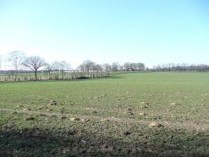 Wallhecken-Buckelsbg-Forsthsweg